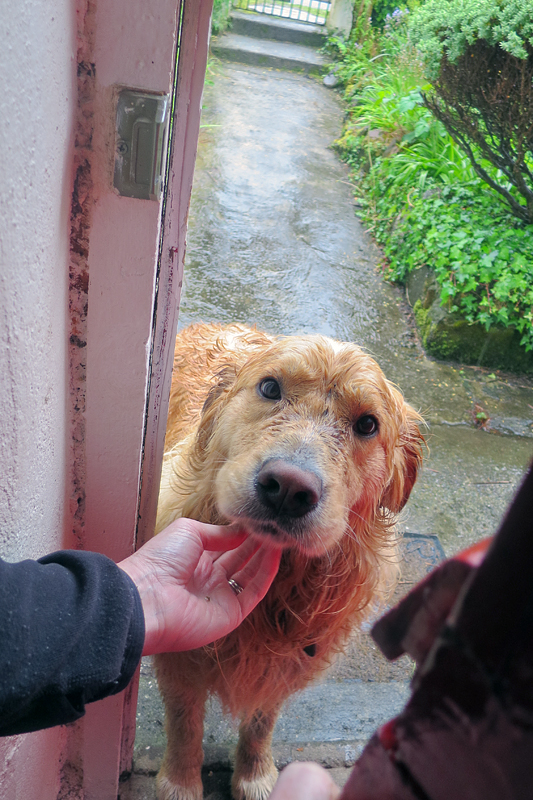 A local dog visiting during the rain.