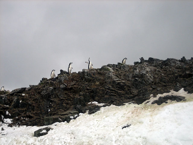 Chinstrap penguins at Half Moon Island.