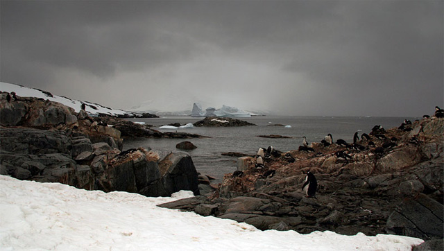 Do you see the ghost in this photo? A figure from the Heroic Age of Antarctic Exploration appears to be sitting on the rocks in the left middleground. (The image is an illusion: it is really a Gentoo penguin, but it is eerie nonetheless.)